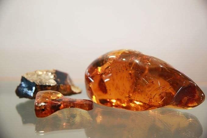 亿年前蛇类琥珀被发现