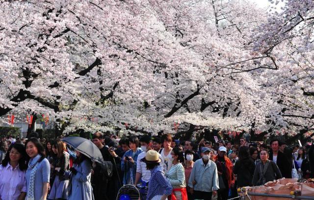 日本东京樱花季提前