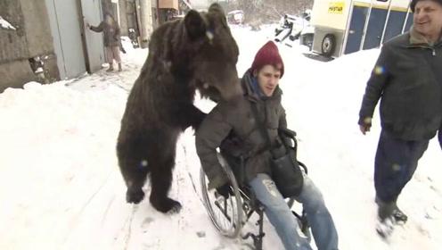 战斗民族可爱熊宝推轮椅