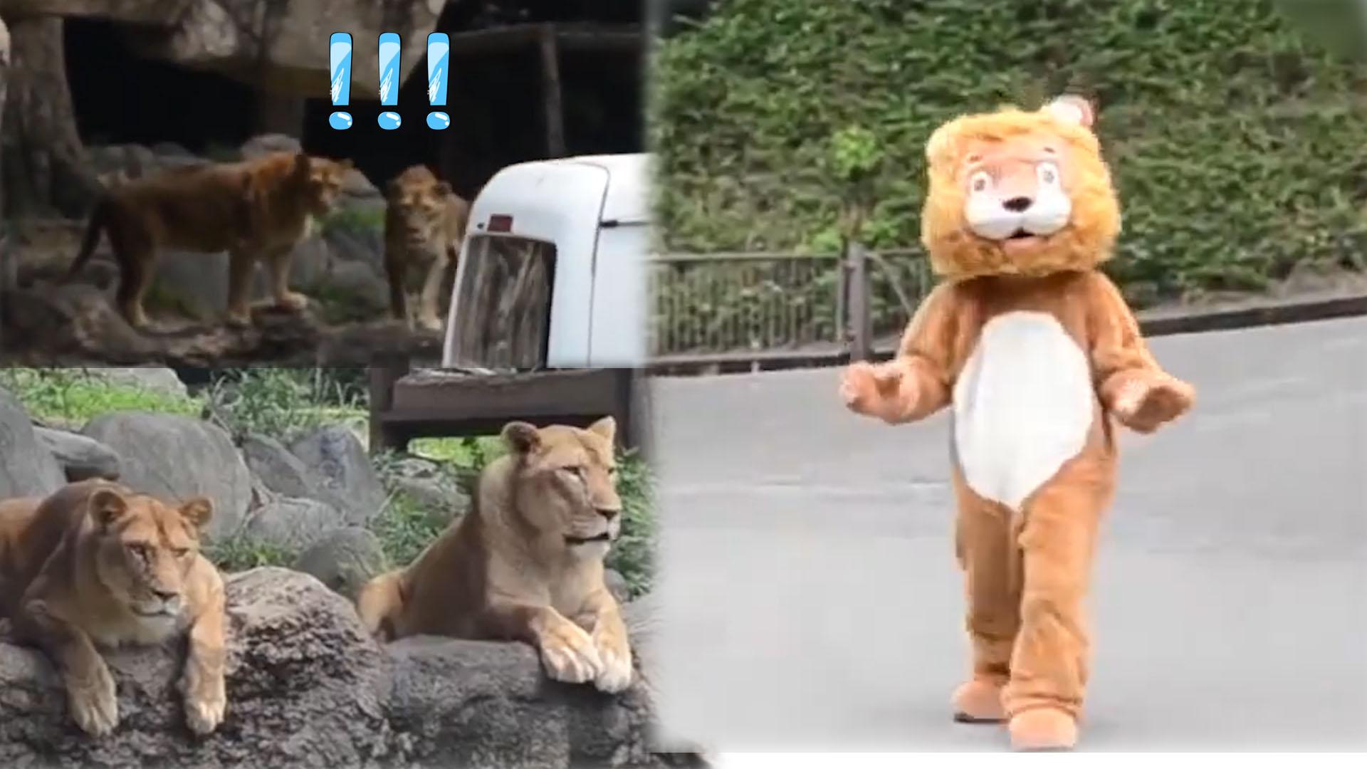 日本动物园模拟狮子出逃演习
