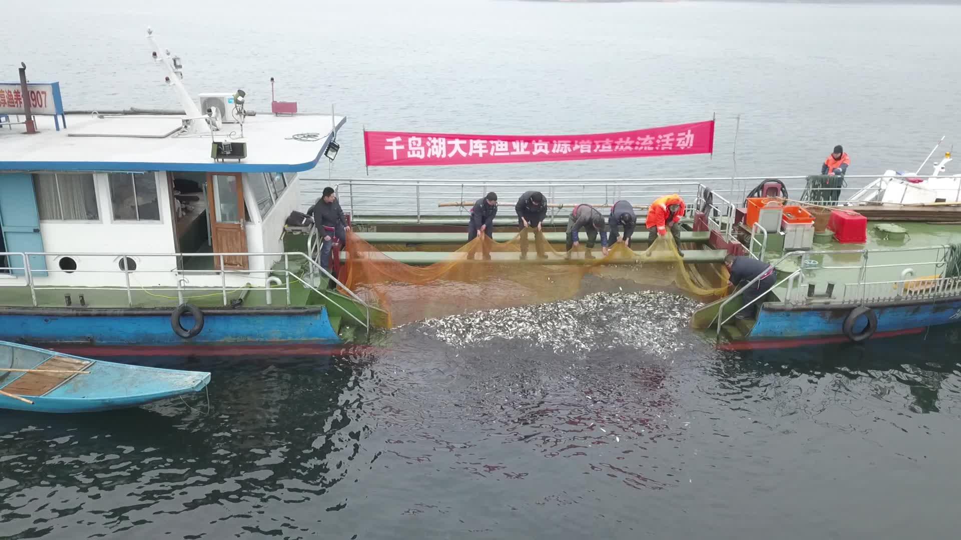 """新年第一""""放"""",20万尾鱼种放入千岛湖"""