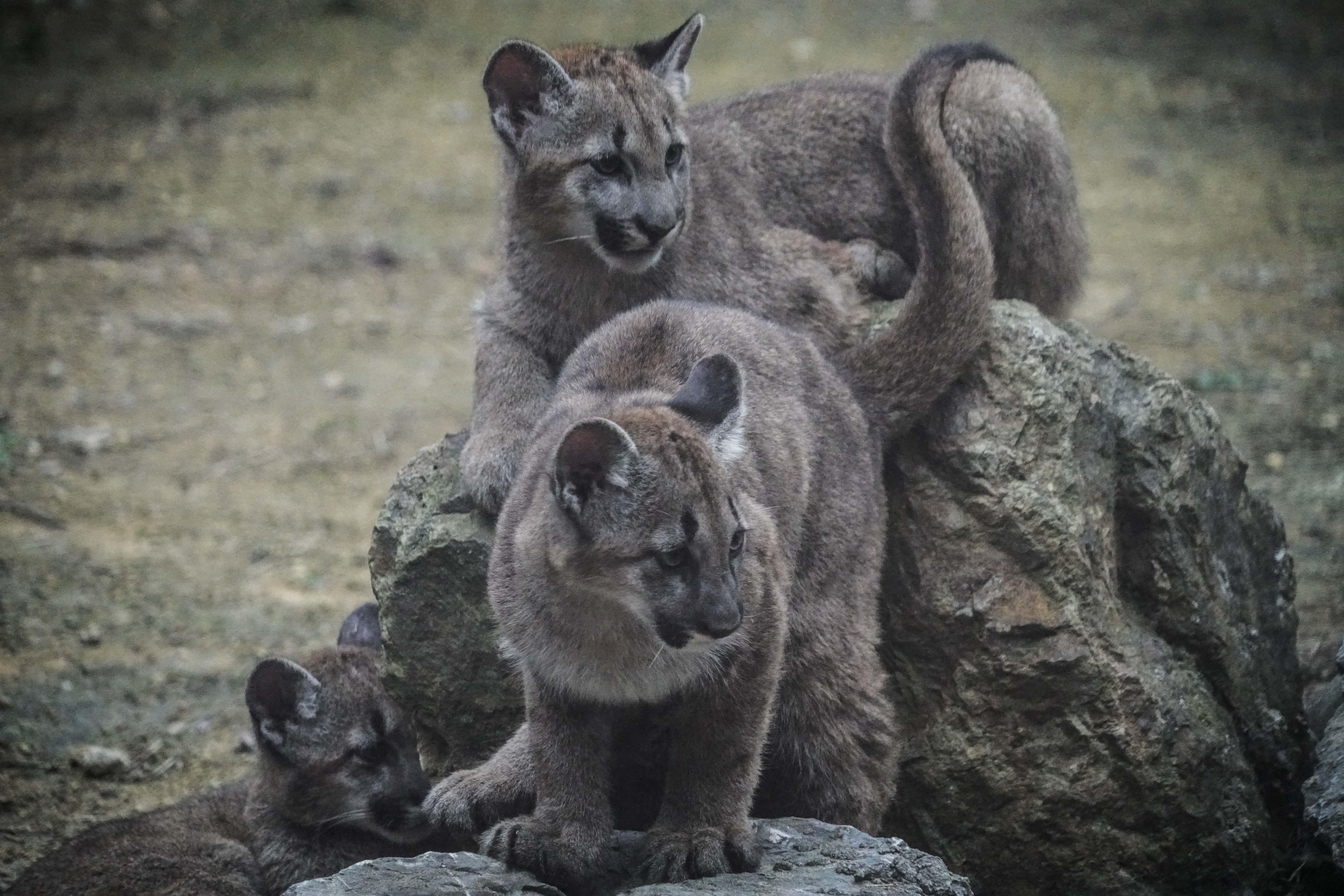 外观很帅的动物