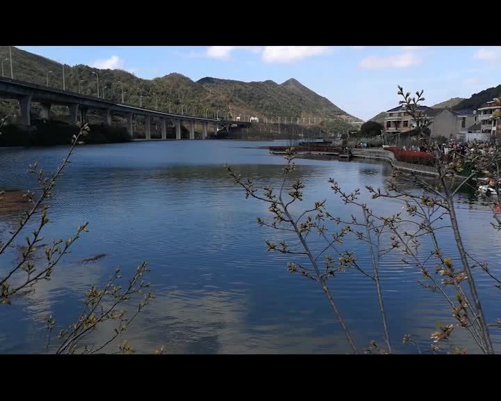 视频_金塘李子节视频