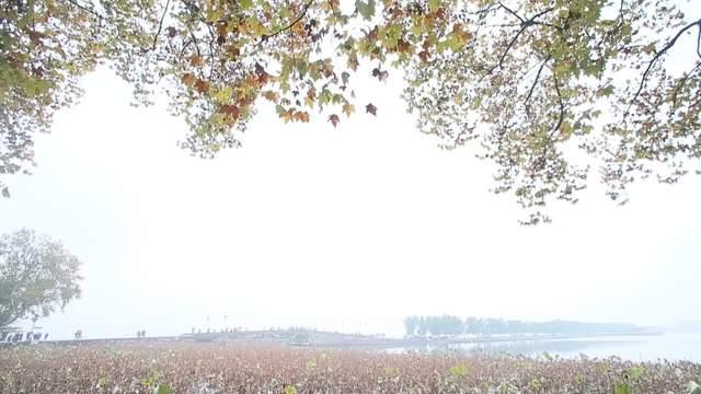 """杭州""""小雪""""无雪  西湖留得残荷听雨声"""