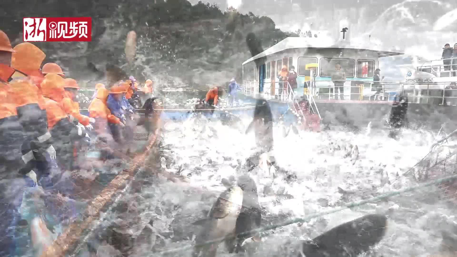 万鱼跃起的千岛湖冬捕