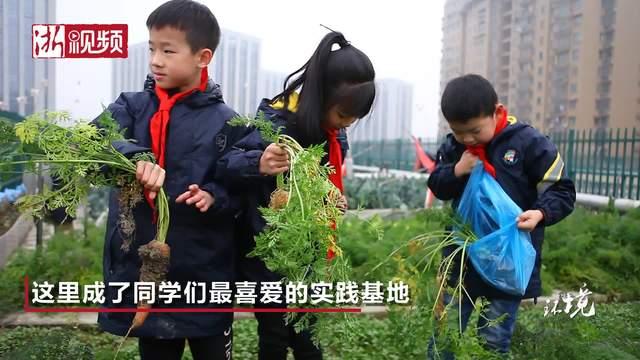 杭州一所小学斩获中国屋顶绿化大奖 到底有何过人之处