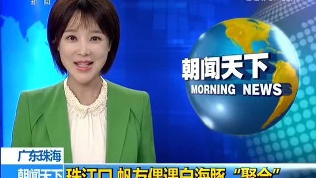 """珠江口:帆友偶遇白海豚""""聚会"""""""