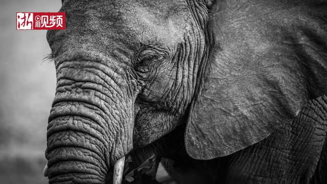 他6年间四次进入非洲大地 一万多张照片记录野生动物