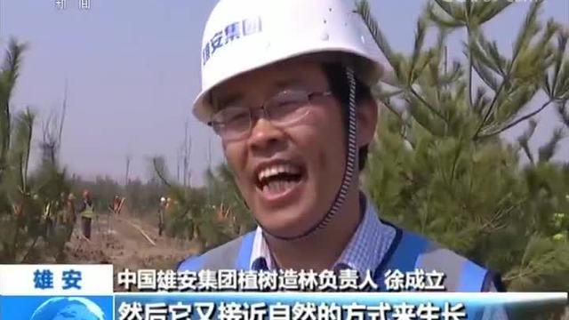 """雄安新区:打造""""千年秀林"""" 加强生态建设"""