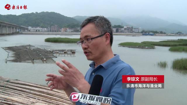 太平洋牡蛎:落户清江四十载