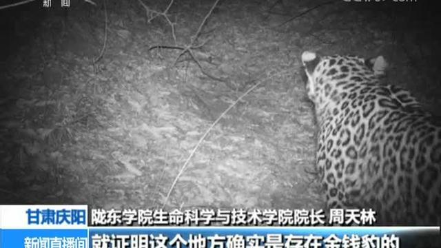甘肃庆阳:发现金钱豹踪迹 属极小濒危种群