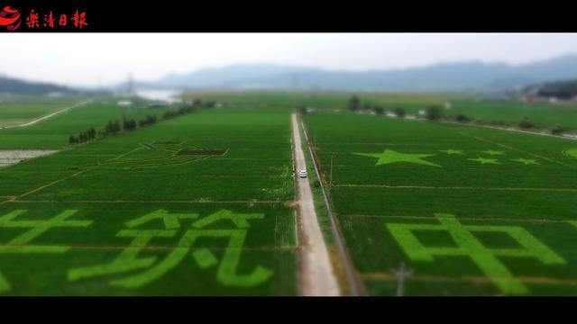 """太美了芙蓉镇! 彩色稻田里的""""美丽中国梦""""!"""