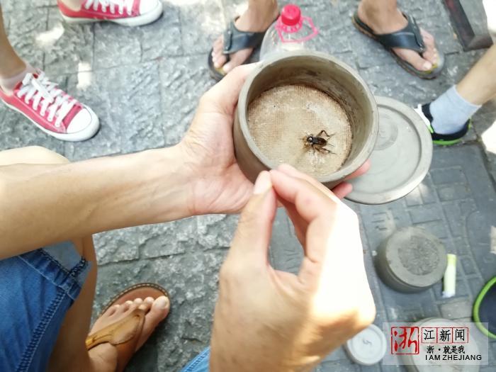 立秋过后 杭州蛐蛐市场日渐热闹