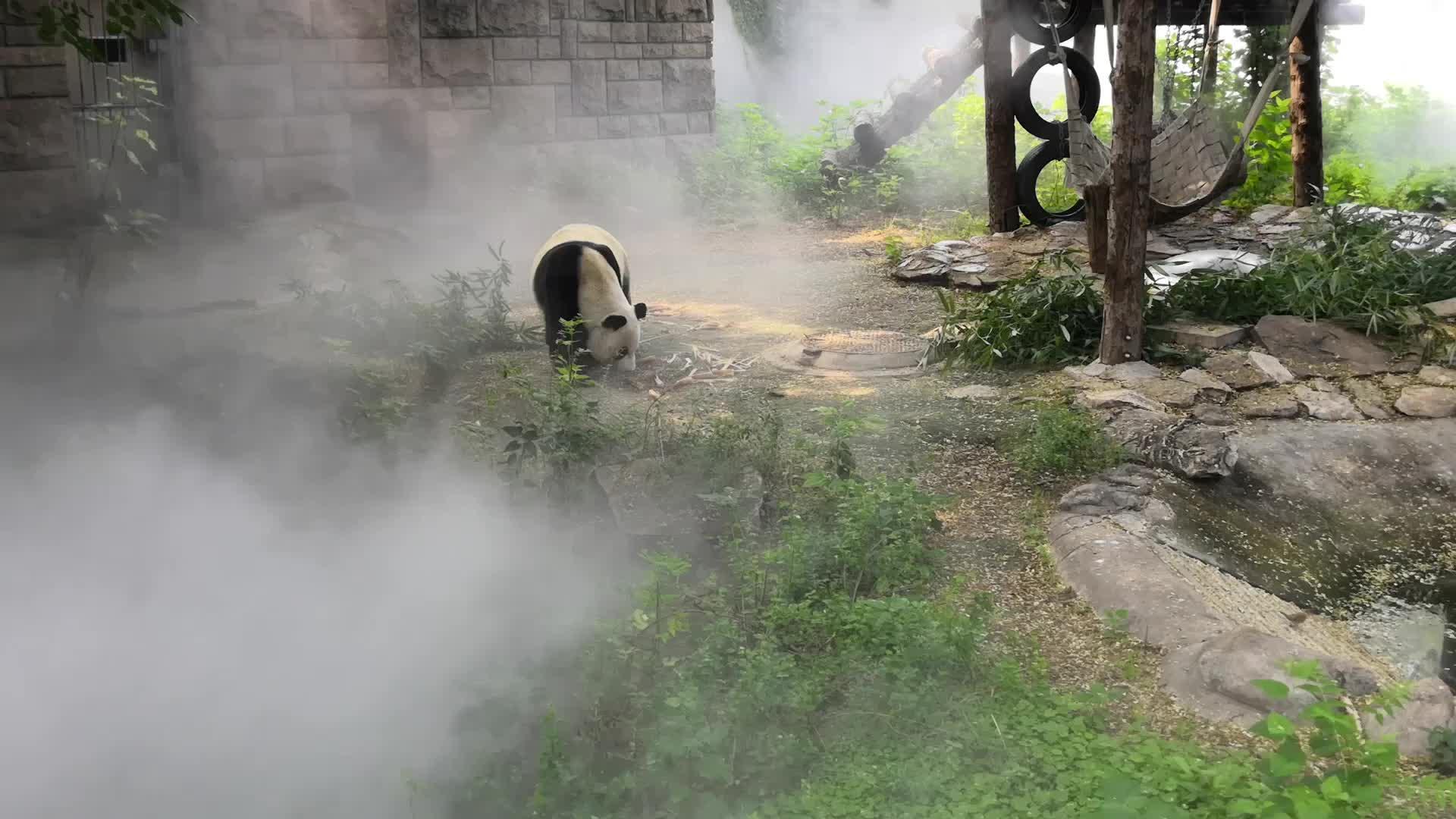 """大熊猫都用""""保湿喷雾""""了"""