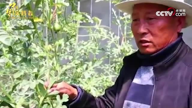 张际明:18年如一日扎根西藏 助白朗县瓜果飘香
