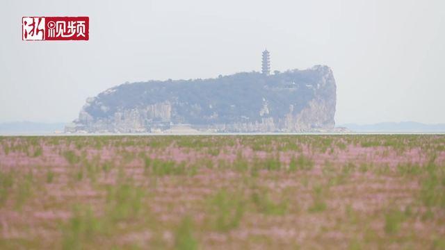 """江西九江:鄱阳湖现""""大草原""""景观"""