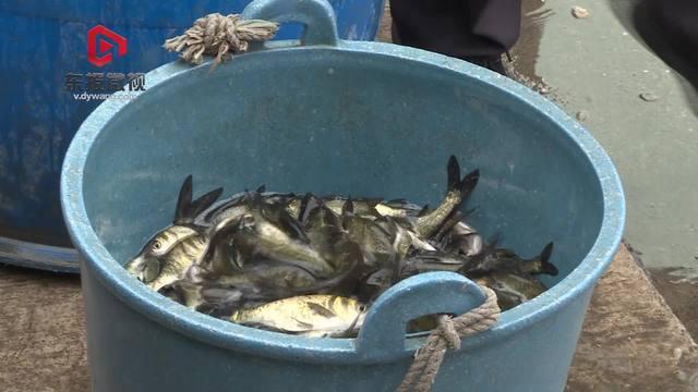 42万尾鱼苗放流东阳母亲河 非法捕鱼涉案当事人:以后再也不敢电鱼了